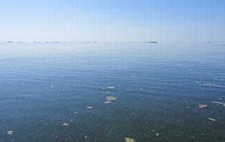 cyanobacteria seen on the Baltic Sea.